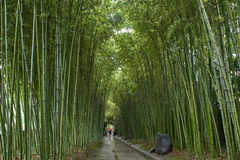Chinese bamboo park in Shanghai Royalty Free Stock Photo