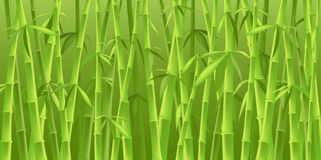 Chinese bamboo trees Royalty Free Stock Photography