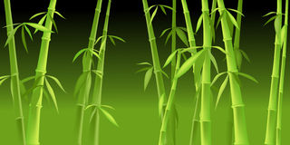 Chinese bamboo trees Stock Photo