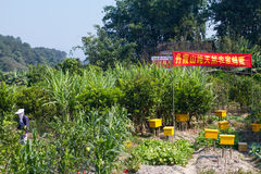 Chinese Bee Keeper royalty free stock photos