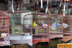 Chinese bird cages and birds. These are the cages of birds in the bird market at hong kong. chinese would like to let their birds to live in these cages. each Royalty Free Stock Photo