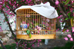 Chinese birdcage in garden. The chinese wooden birdcage closeup shot in the gardens Royalty Free Stock Photography