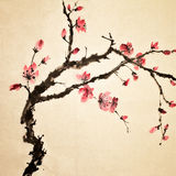 Chinese bloem stock afbeelding