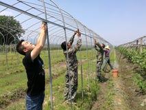 Chinese boeren in arbeid Royalty-vrije Stock Fotografie