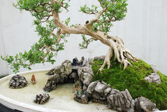 The Chinese bonsai Royalty Free Stock Photography