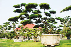 The Chinese bonsai garden Stock Photos