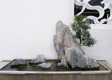 Chinese bonsai rock and tree Stock Image