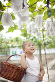 Chinese boy in the vineyard Royalty Free Stock Image