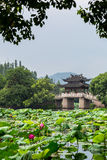 Chinese bridge at West lake Royalty Free Stock Image
