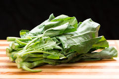 Chinese Broccoli Stock Photography