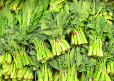 Chinese Broccoli Royalty Free Stock Images