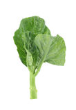 Chinese broccoli on white background.  Stock Photography