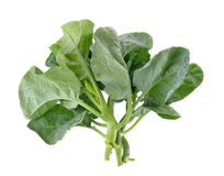 Chinese broccoli on white background Stock Photo