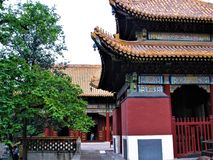 Chinese building, art, architecture, history and time in Beijing city, China. Beautiful details, enchanting atmosphere, multicoloured garnish, tree, roofs and stock images