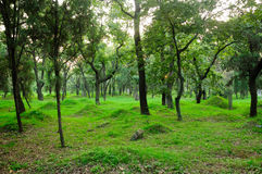 Chinese Burial Mounds. Burial mounds at Confucius family cemetery in the city of Qufu in Shandong Province China Royalty Free Stock Photography