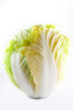 Chinese cabbage. On white background Royalty Free Stock Photo