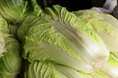 Chinese cabbage. Close up view of chinese cabbage Royalty Free Stock Image
