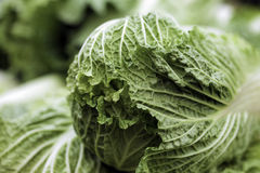 Chinese Cabbage. For sale at a market Royalty Free Stock Image
