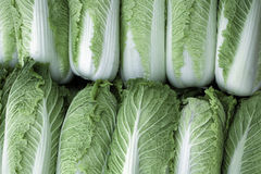 Chinese Cabbage. A pile of Chinese cabbages for sale at a market Royalty Free Stock Images