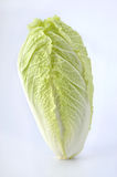 Chinese Cabbage Royalty Free Stock Photos