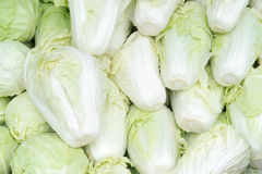 Chinese Cabbage arrange in a row Stock Photo