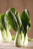 Chinese cabbage bok choy pak-choi on rustic Royalty Free Stock Images