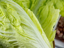 Chinese cabbage in dish with Minced pork Royalty Free Stock Image