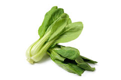 Chinese Cabbage isolate on white background. Chinese Cabbage on white background Stock Image