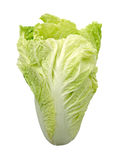 Chinese cabbage isolate on a white background (clipping path) Royalty Free Stock Images