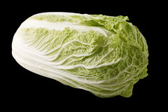 Chinese cabbage isolated. Chinese cabbage on black background Stock Photography