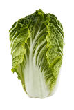 Chinese cabbage isolated over white. Background royalty free stock images