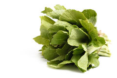 Chinese cabbage  on white background Royalty Free Stock Image