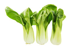 Chinese Cabbage IV Royalty Free Stock Image
