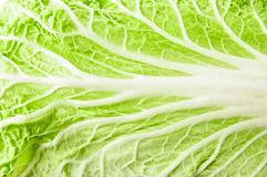 Chinese cabbage leaf Royalty Free Stock Image
