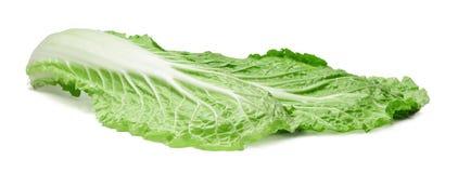 Chinese cabbage leaf on isolated white background. Close-up. stock image