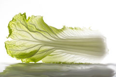 Chinese cabbage leafage Royalty Free Stock Photography