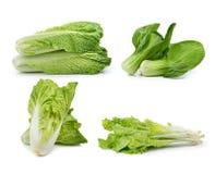 Chinese cabbage ,lettuce , Bok choy, on awhite background. Fresh chinese cabbage ,lettuce , Bok choy, on awhite background royalty free stock image