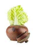 Chinese cabbage in old clay jar Stock Images