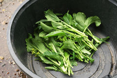 Chinese Cabbage-PAI TSAI or Brassica chinensis Jusl var parachi. Nensis (Bailey) Tsen & Lee convert soil Stock Photo