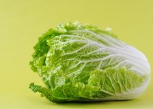 Chinese cabbage or salad Romano. Loaf of chinese cabbage or salad Romano Stock Photography