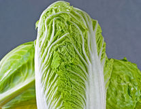 Chinese cabbage. Shot in studio Royalty Free Stock Image