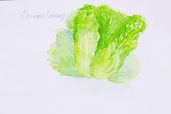 Chinese cabbage watercolor painted Stock Photo