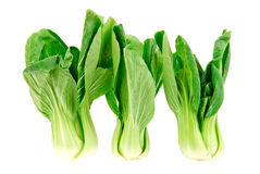 Chinese cabbages in isolated on white background Royalty Free Stock Photos