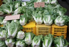 Chinese cabbages for selling Royalty Free Stock Photography