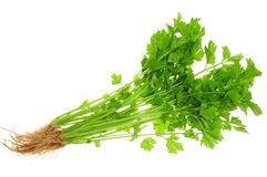 Chinese Celery Royalty Free Stock Image