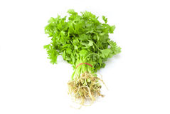 Chinese celery. Celery bunch isolated on white Royalty Free Stock Images