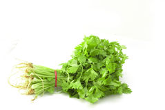 Chinese celery. Celery bunch isolated on white Stock Photo