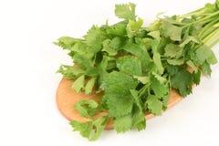 Chinese celery, Celery, Smaltage (Apium graveolens Linn.) Stock Images