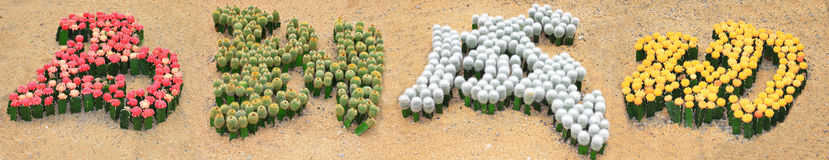 Chinese character with cactus Royalty Free Stock Images