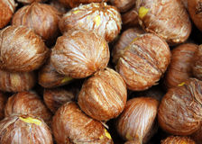 Chinese chestnut. Some Chinese chestnut in  Sichuan.This chestnut  is a kind of Chinese medicine Royalty Free Stock Image